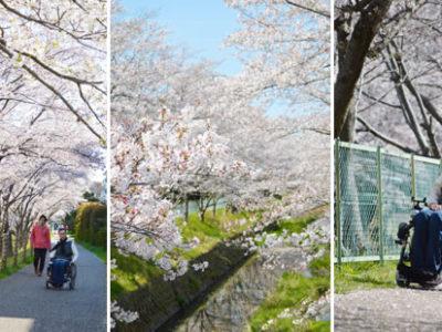 2019年4月桜吹雪の中、お花見に行きました♪